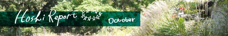 星ヶ丘洋裁学校レポート 10月
