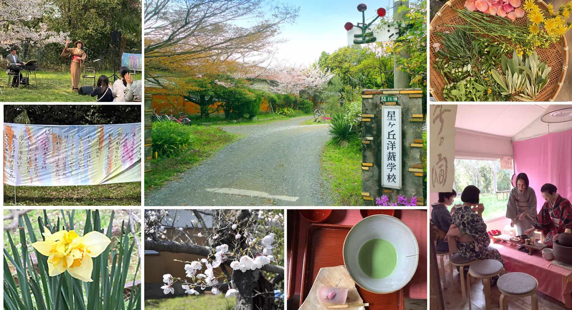 星ヶ丘洋裁学校 桜花祭