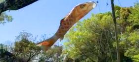 星ヶ丘洋裁学校の鯉のぼり